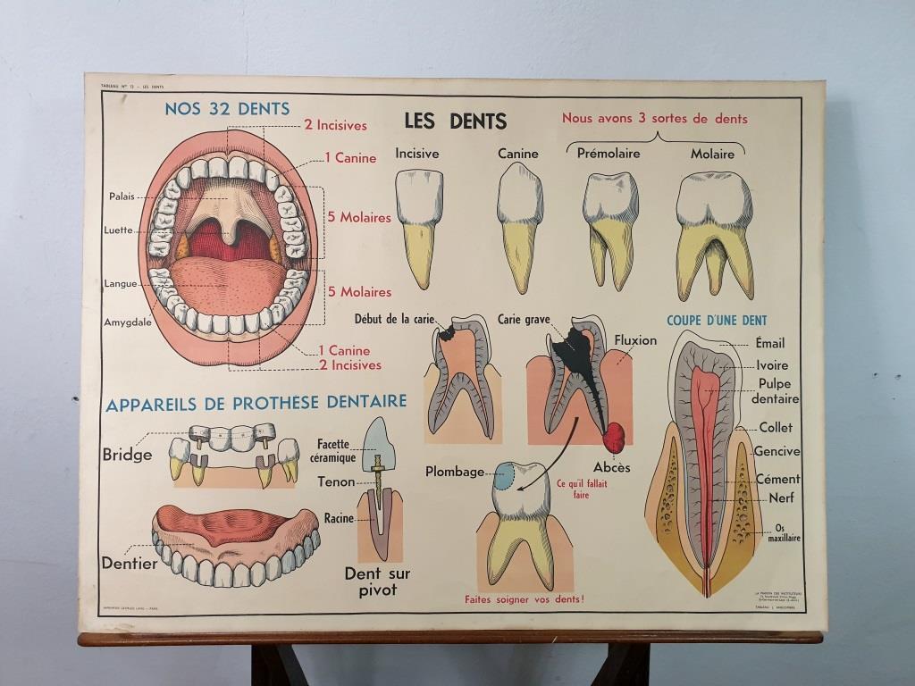 0 affiche anatomie 10