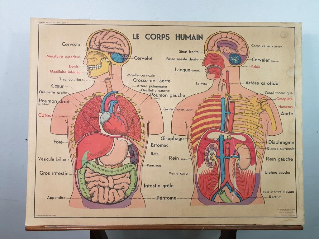 0 affiche anatomie 8