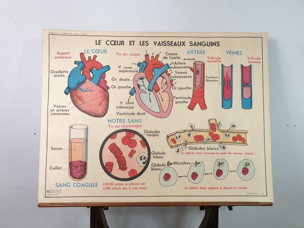 0 affiche anatomique 13