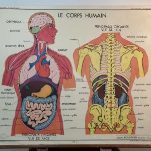 0 affiche anatomique le corps
