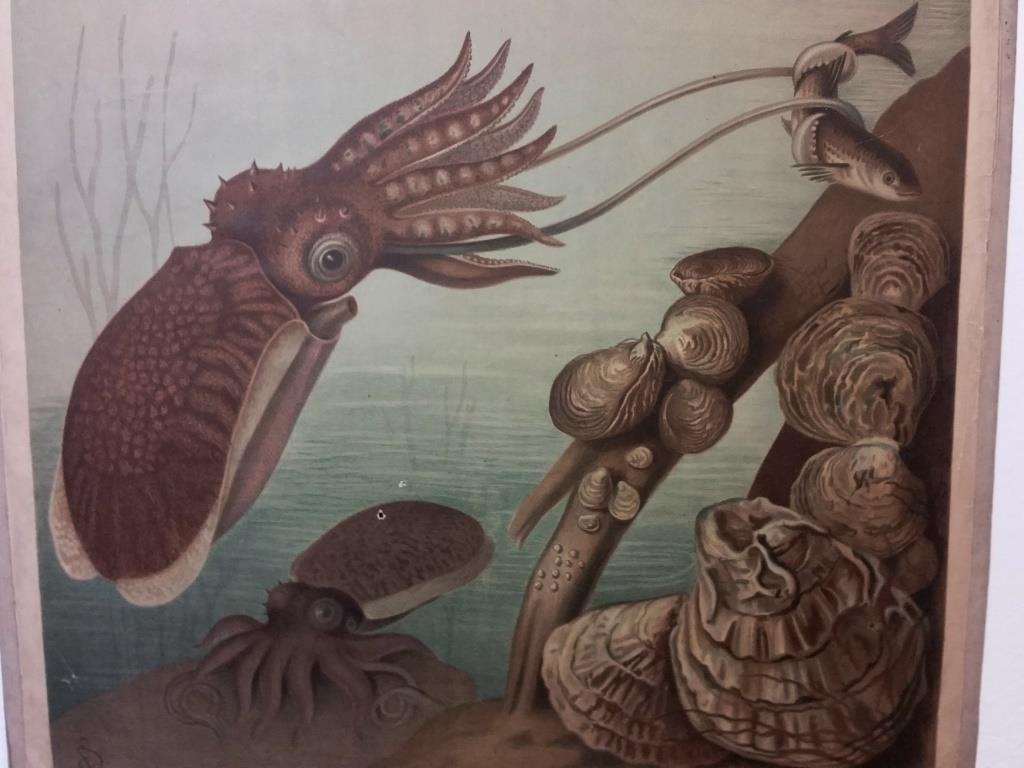0 affiche scolaire histoire naturelle escargot