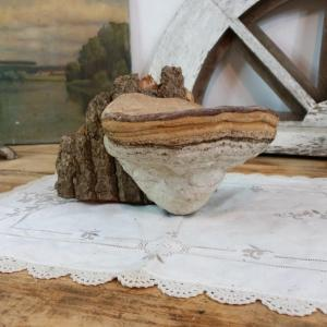 0 champignon amadou 2