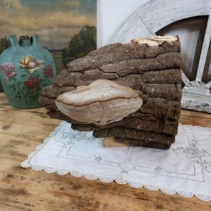 0 champignon amadou 3