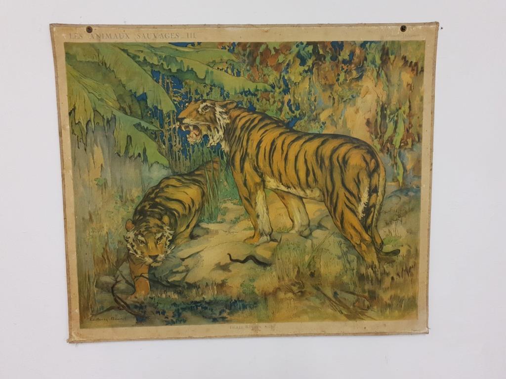 0 tableau scolaire les tigres