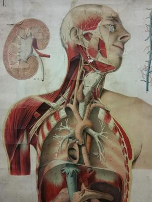 Affiche Doc. Hoelemann