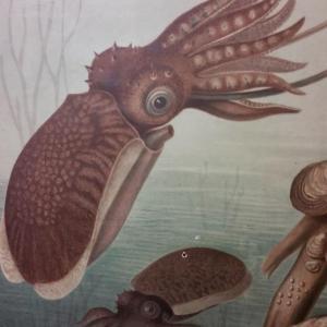 01 affiche scolaire histoire naturelle escargot