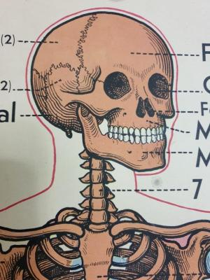 01 affiche squelette