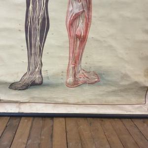 08 grande affiche anatomique