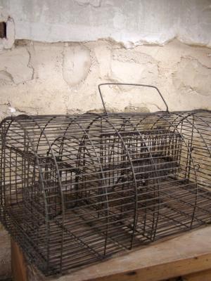 Cage à souris