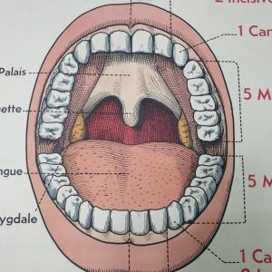 1 affiche anatomie 10