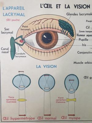 Affiche scolaire Anatomie