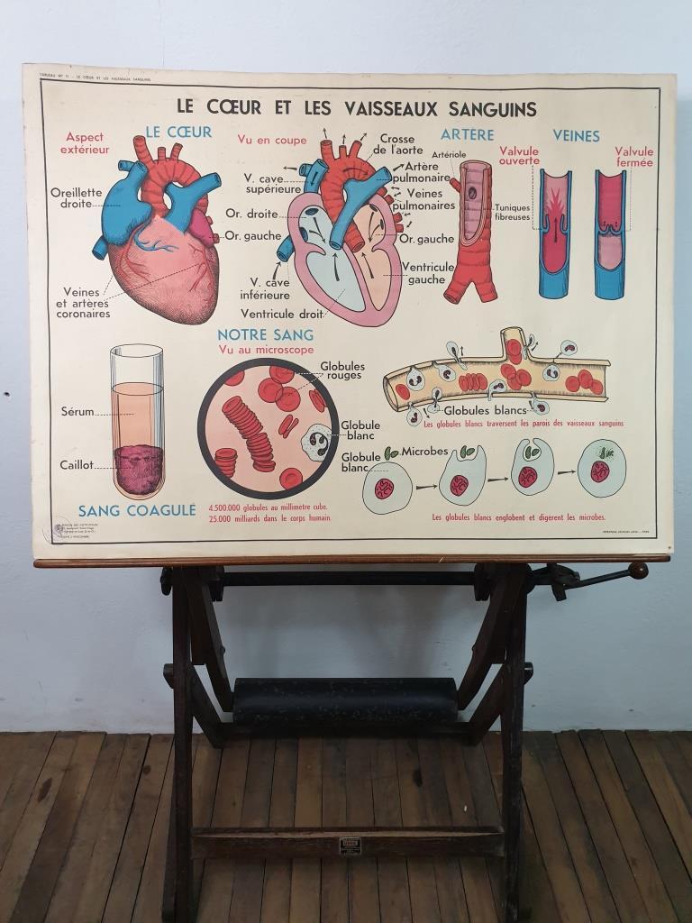 1 affiche anatomique 13