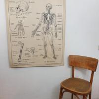 1 affiche carte scolaire a hatier squelette excretion