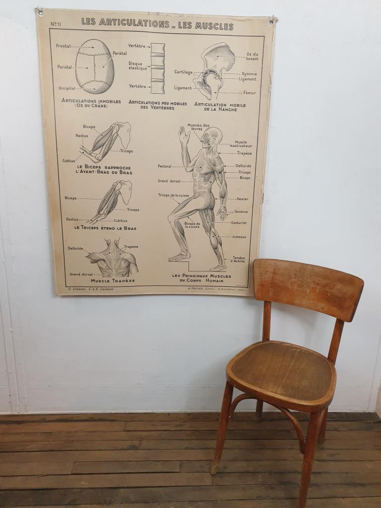 1 affiche hatier articulation systeme nerveux