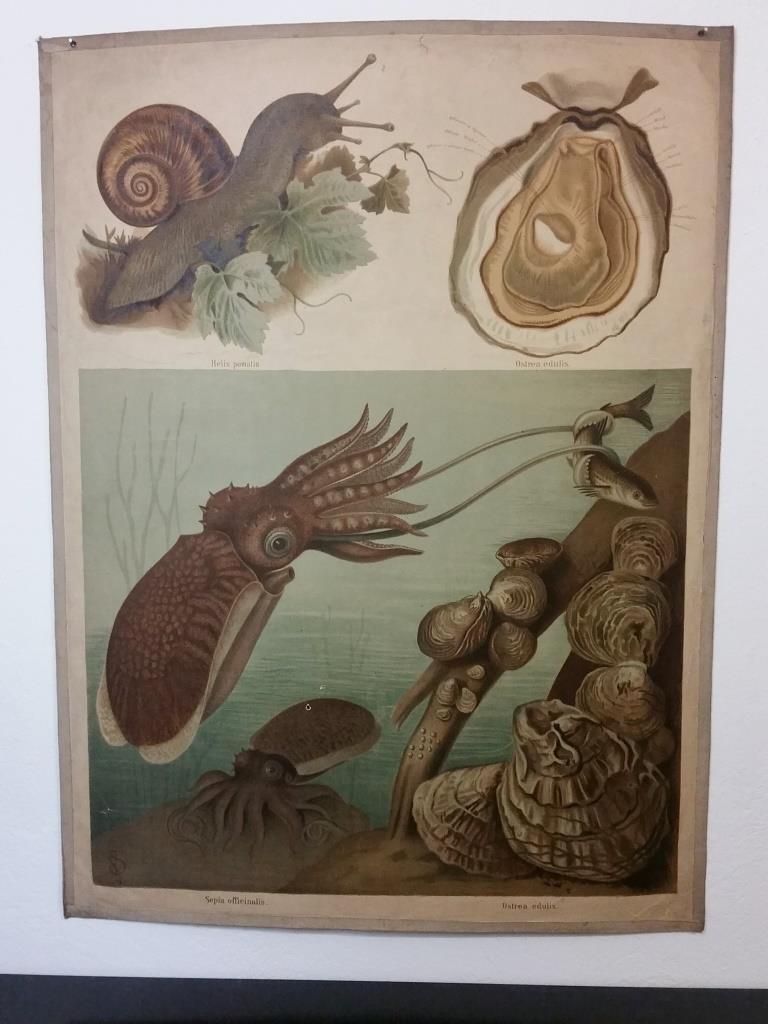1 affiche scolaire histoire naturelle escargot