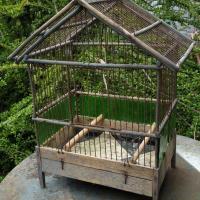 1 cage a oiseaux