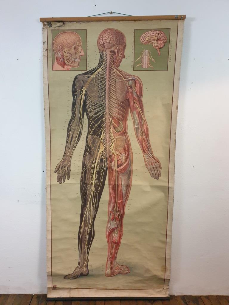 1 grande affiche anatomique