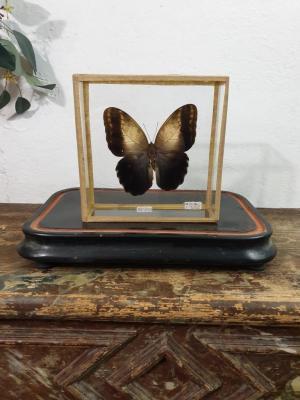 1 papillon 1