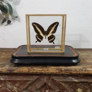 1 papillon 2