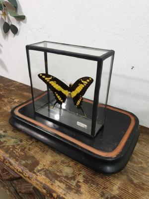1 papillon 3