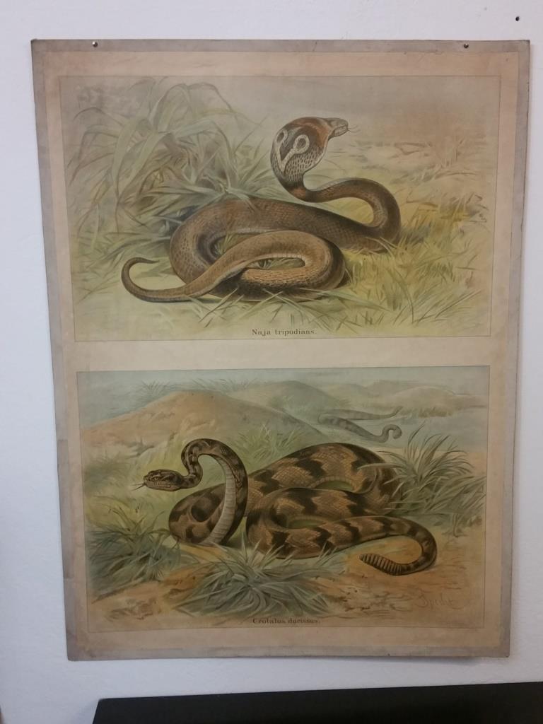 1 tableau educatif les serpents
