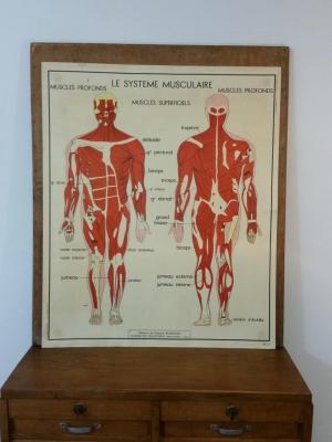1 tableau pedagogique rossignol le systemes musculaire nerveux