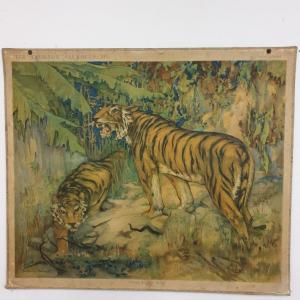 1 tableau scolaire les tigres