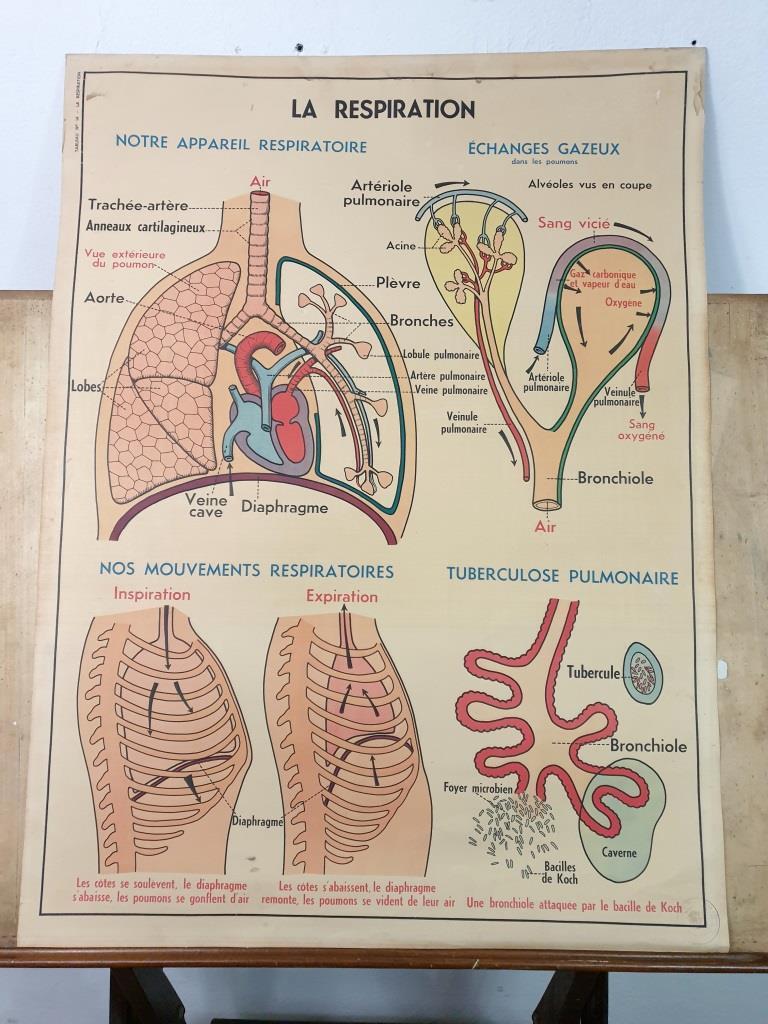 2 affiche anatomie 10
