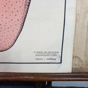 2 affiche anatomie 12