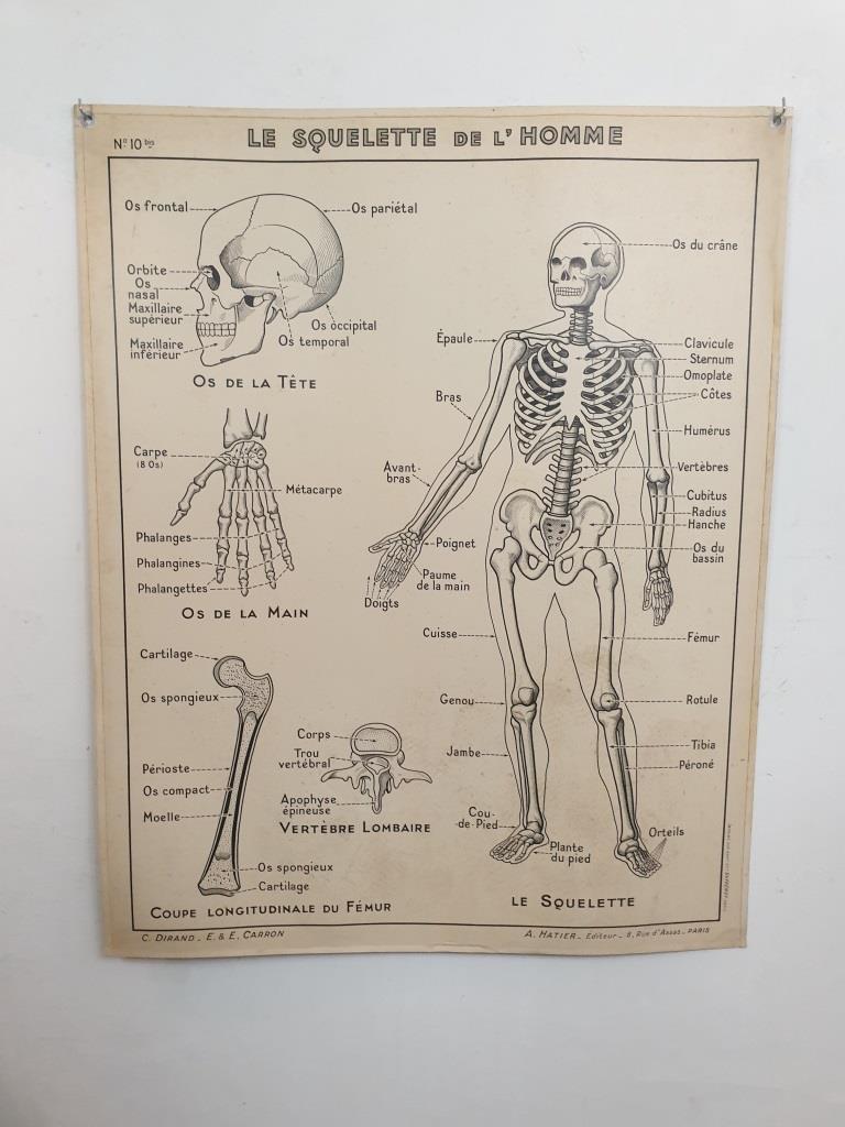 2 affiche carte scolaire a hatier squelette excretion