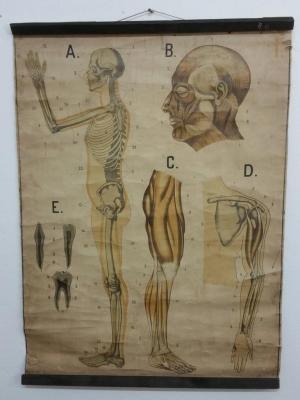 Tableau anatomique