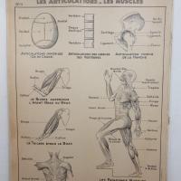 2 affiche hatier articulation systeme nerveux