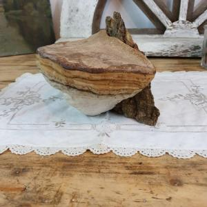 2 champignon amadou 2