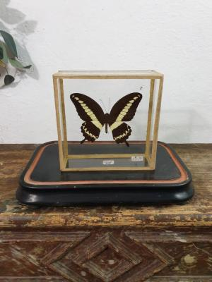 2 papillon 2