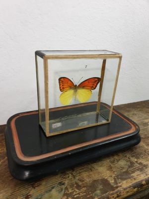 2 papillon 5