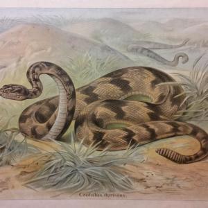 2 tableau educatif les serpents