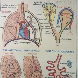3 affiche anatomie 10
