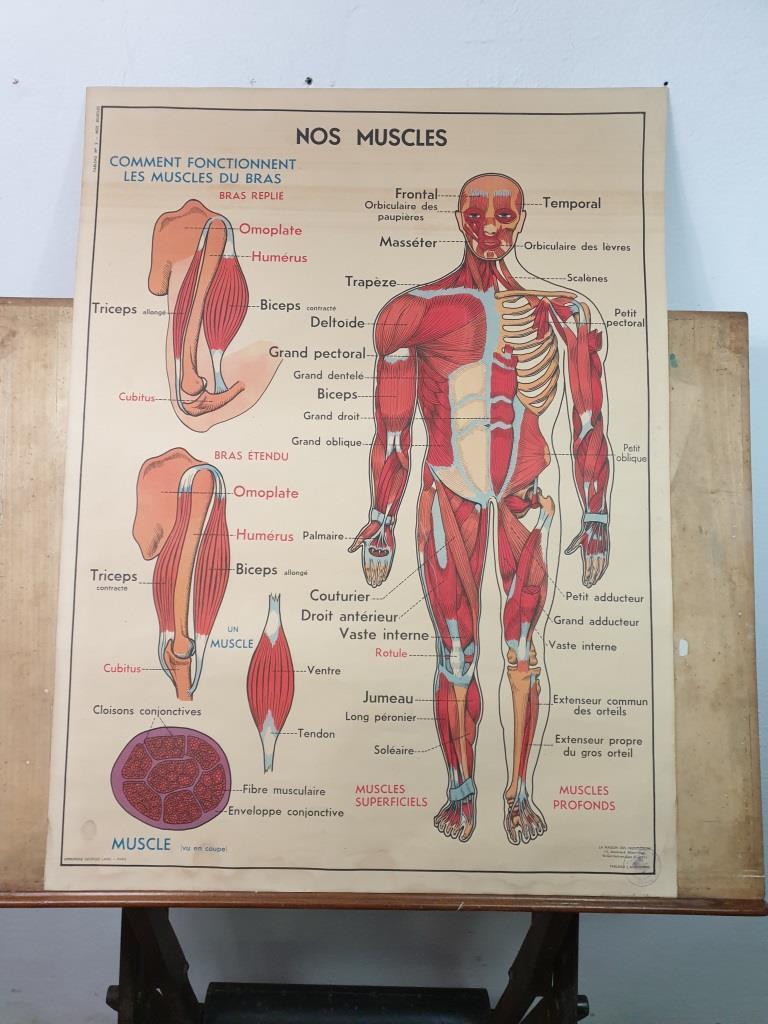 3 affiche anatomie 8