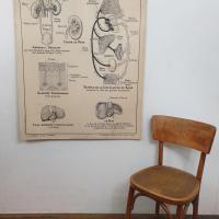 3 affiche carte scolaire a hatier squelette excretion