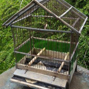3 cage a oiseaux