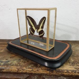 3 papillon 2