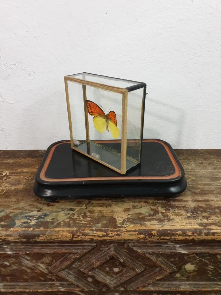 3 papillon 5