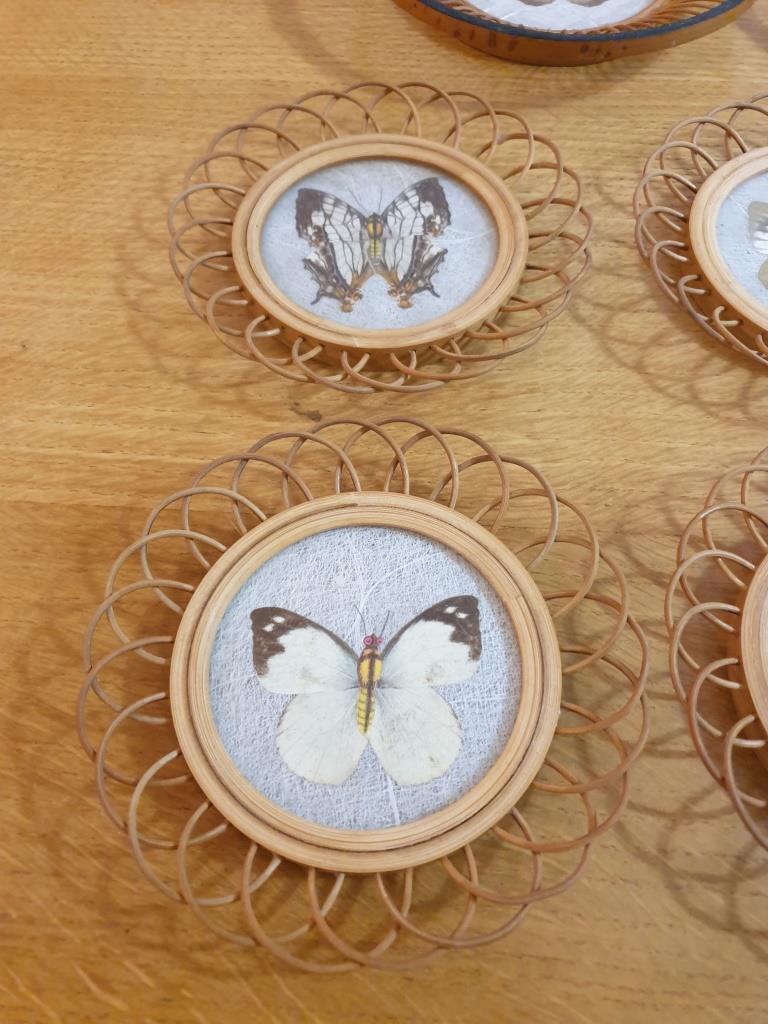 3 sous verres papillons