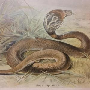 3 tableau educatif les serpents