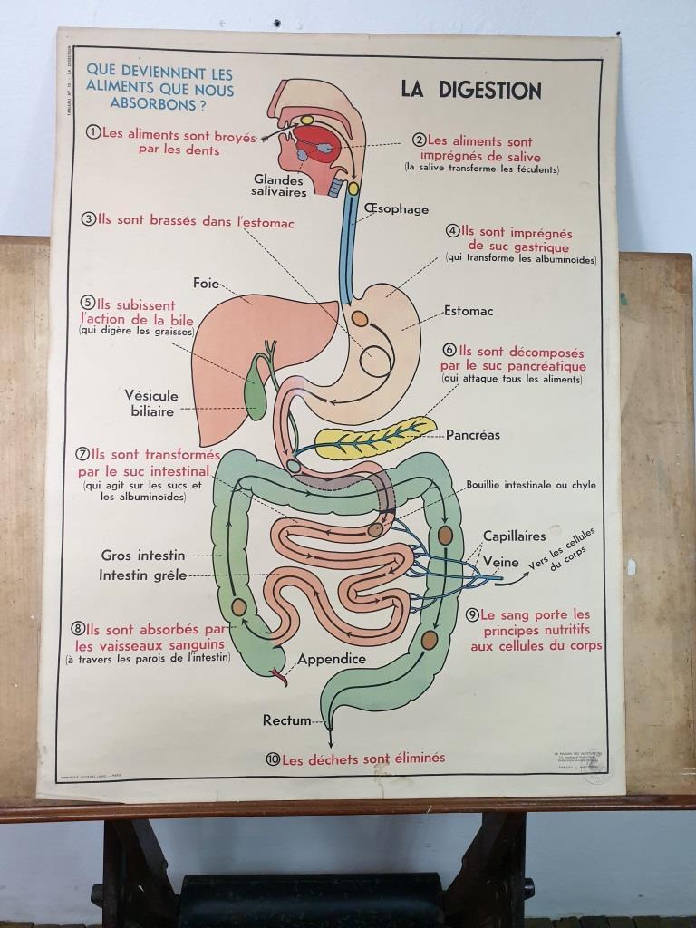 4 affiche anatomique 10