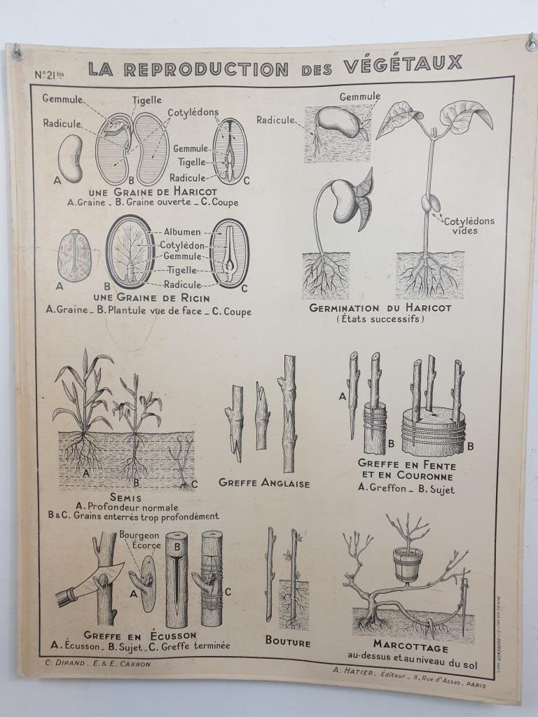 4 affiche carte scolaire a hatier le fruit et les vegetaux