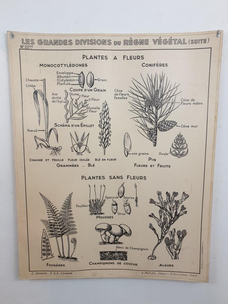 4 affiche carte scolaire a hatier le regne vegetal 1