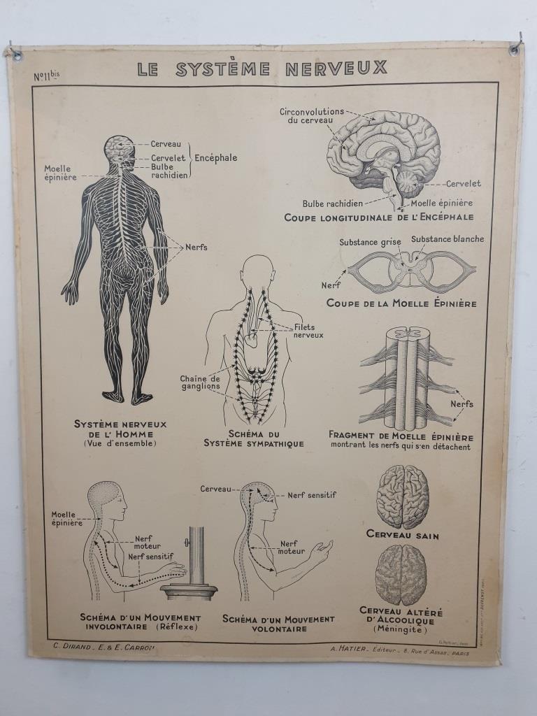 4 affiche hatier articulation systeme nerveux