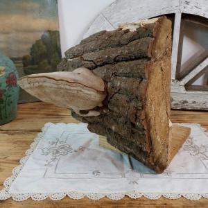 4 champignon amadou 3