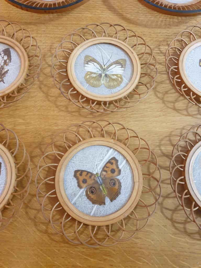 4 sous verres papillons